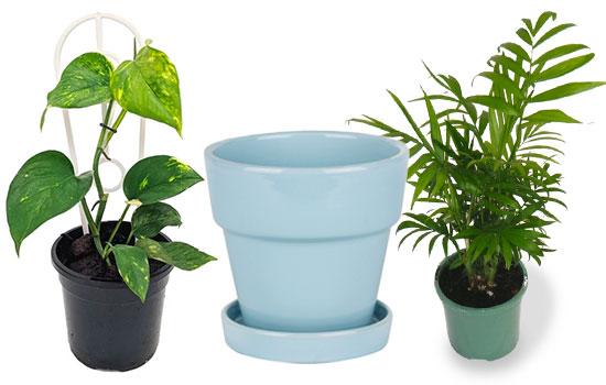 2 plants and a decorative pot