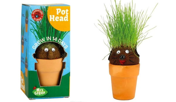 A potted plant with a face